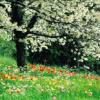 Las estaciones Primavera